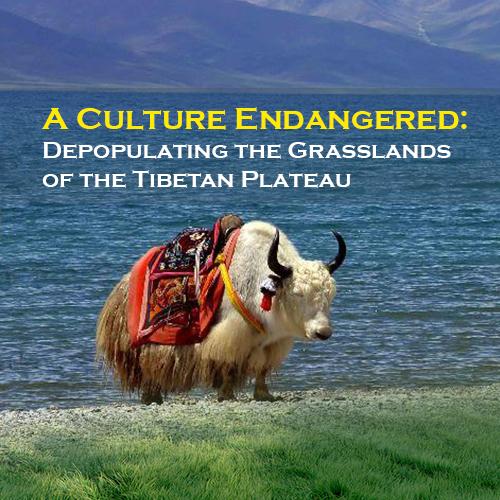 A Culture Endangered: Depopulating the Grasslands of the Tibetan Plateau